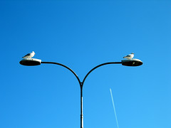 Seagulls in Helmsdale (IrenicRhonda) Tags: seagulls game bird nature public animal geotagged march scotland purple gulls scottish pre winner done 2009 seabirds herringgulls herringgull gamewinner p4m babymomma redbubble pfosilver thechallengefactory yourock1st geo:lat=5811531 geo:lon=3653913 pregamewinner