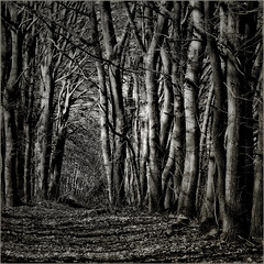 Looking Through (PHLB - Luc B) Tags: wood trees bw tree forest dark square bomen woods boom mywebsite lookthrough 500x500 explored setnieuw settrees winner500 httpphlbpcdheldennl
