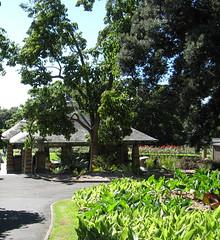 sunny botanic gardens sydney