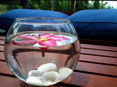 Pink Leelawadee Flower In Glass / ดอกลีลาวดีสีชมพูในแก้วน้ำ