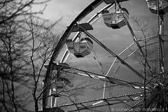 Ferris Wheel (Seattle) ({Connie} Constanza Natalino | Photography) Tags: seattle sky bw white black art wheel canon fun cloudy branches ferris eerie