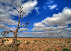 Metaphor (_davidh_) Tags: blue red fab sky cloud tree field south australia wideangle deadtree oldtree outback metaphor middleofnowhere sigma1020 supershot renmark justclouds abigfave canoneos400d aplusphoto