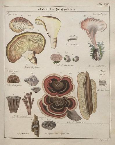 Das System der Pilze und Schwämme, 1817 f