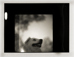 max (e.palecek) Tags: max hasselblad 500cm polaroidback proxar thelittledoglaughed feelinthepeelin