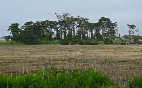 indianislandtrees