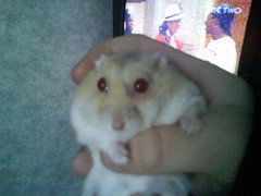 clinging on for life (ikieran97) Tags: toby hamsters