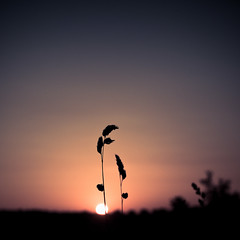 At sunrise (byJosh) Tags: sun color silhouette sunrise landscape 50mm nikon flickr purple sigma thai meet d90 bej ubej