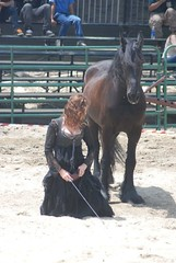ND125 1579 (A J Stevens) Tags: horses horse black beautiful beauty renfaire equestrian pagan frisian equineguild