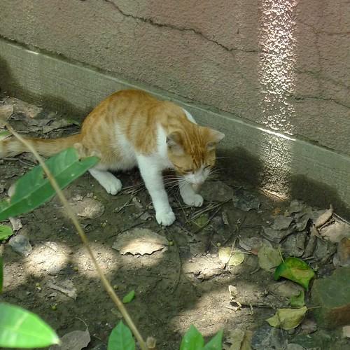 小黃貓與蜥蜴之戰-5