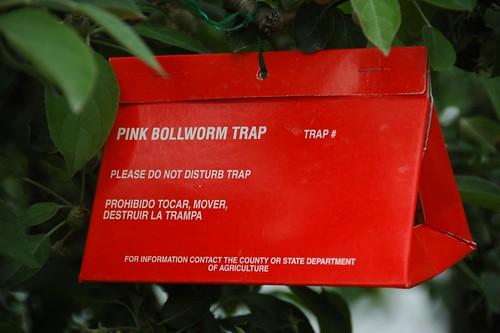 Bollworm Trap