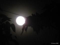 gazing moon