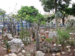 IMG_0237_1 (gwendalyne) Tags: sicilia messina ortobotanico maggio2009