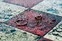 Posture of rain (summerrunner) Tags: summer macro rain june nikon flickr taiwan adobe crown taipei 60mm nikkor 2009 生活 lightroom d80