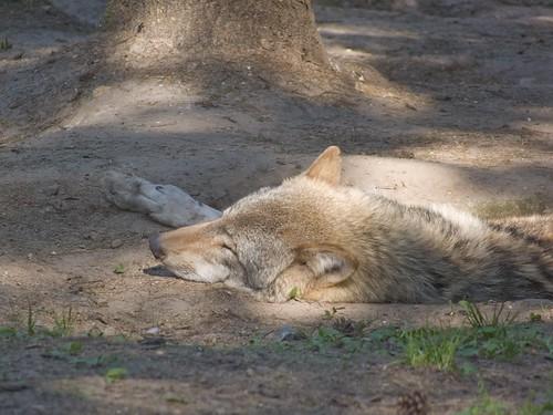 just a nap!