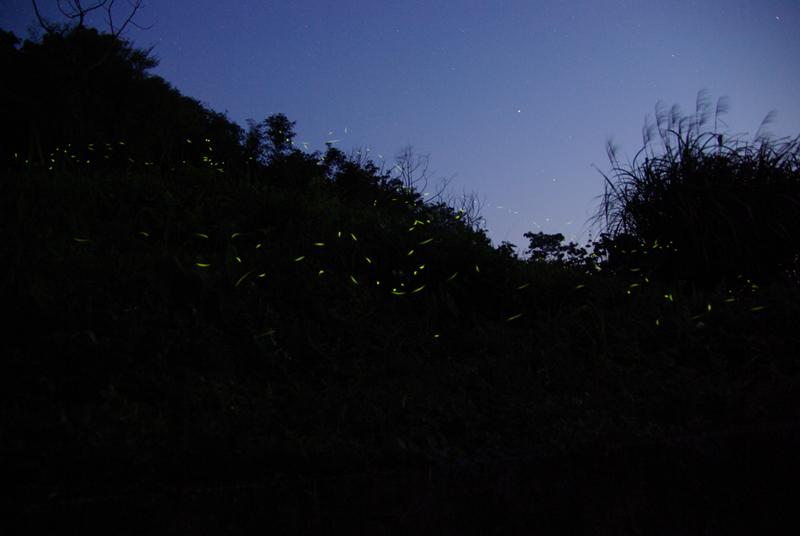 20100502流螢飛舞 閃耀大湖