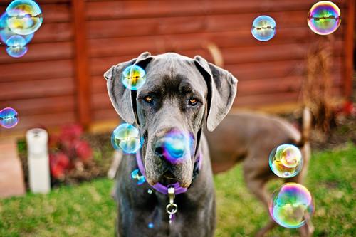23/52 - Bubbles!!! by bivoir