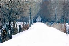 Winter Lane (MMGoode) Tags: trees winter snow fence utah saratogasprings hero winner lande bigmomma gamewinner pfogold pfosilver ruralscapescene pfoisland07a pregamewinner