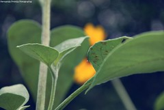 Stranger. (Fernanda Fronza) Tags: blue green love sc colors yellow cores poetry heart bokeh amor stranger corao poesia sorriso abrao amado rodeio perdo sisso feza desconhecida escuta flickrsbest acolhimento platinumphoto amaramaramar somenteamar