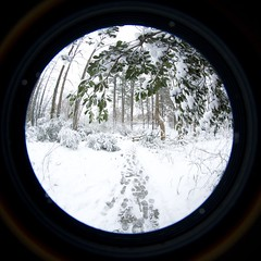 Path Less Taken (pgpanic) Tags: park trees winter dog selfportrait snow lauren nature weather playground sarah sisters digital snowman woods nikon lab frost swings freezing pug wideangle slide rob pitbull fisheye gloves flurries paths fullframe noelle 8mm element d3 bestfriends snowday snowballfight nikond3 nikonwideangle