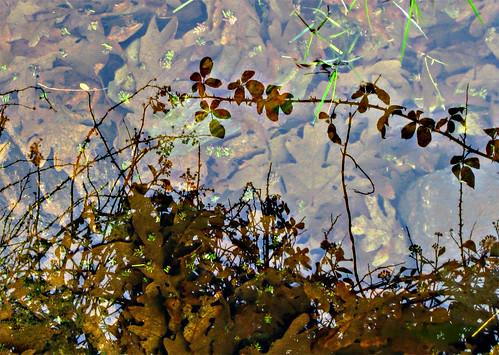 Sombras de agua