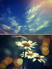 Now my feet wont touch the Ground (AndreaUPl) Tags: life old sky flower clouds lights drops dof coldplay ground ii aged technicolor diptic andreaupl
