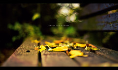 Enjoy the Silence (isayx3) Tags: autumn leaves canon bench 50mm bokeh f14 usm