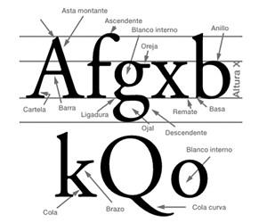 Anatomia Letra