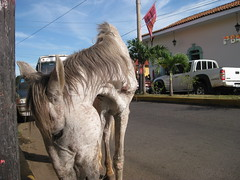 Abused horse in Leon, Nicaragua (ashabot) Tags: horse homeless leon nicaragua abuse homelessanimals