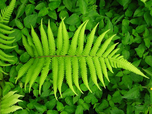 nature leaves green fractal braken