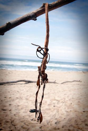 Seaweed, pescadero