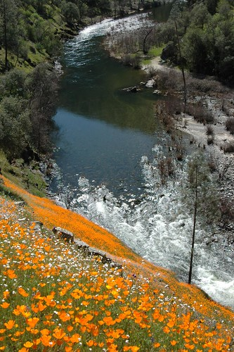 hite cove trail poppies and South Fork of the Merced River below by Mrs Rachel