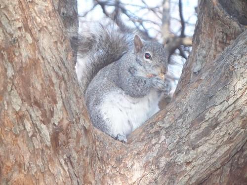3.22.2009 Chicago Natura (22)