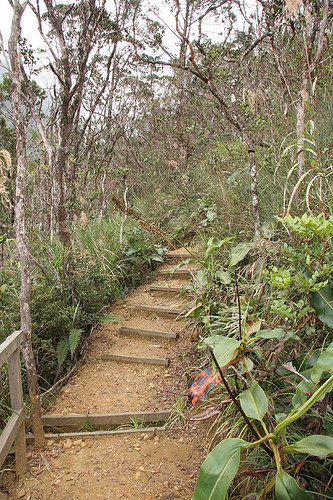 Along the Nepenthes Trail