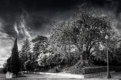 Just a tree (Daniel Guillan) Tags: barcelona bw white black tree canon arbol shots 10 negro bcn sigma mm outstanding 10mm blacno outstandingshots