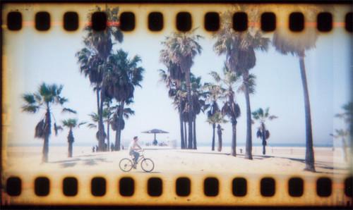 Venice_Rose