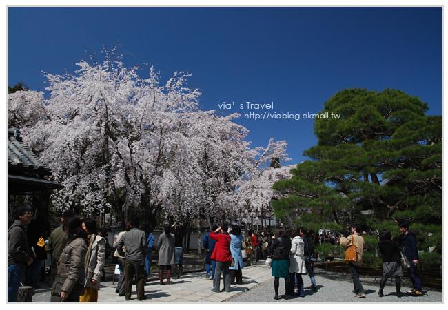 【京都旅遊】Via的京都自由行第2天~京都醍醐寺