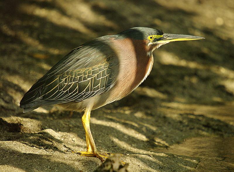 Gren Heron
