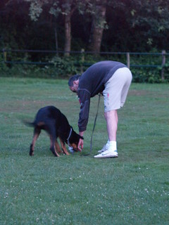 Dog training: trying some sports