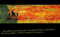 the ruthless warrior (gicol) Tags: red italy tractor flower fleur field rouge rojo italia flor poppy campo fiori rosso puglia weeding coquelicot trattore apulia agricoltura papavero sowing foggia aratura stradastatale16