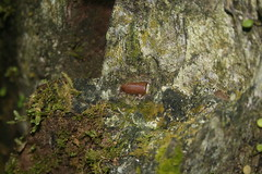 Bullet In A Tree