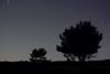 En el claro de la luna (_madmarx_) Tags: longexposure light sky tree stars arbol estrelas galicia noite isla ons pontevedra riasbaixas xsi bueu árbore illadeons morrazo 450d canoneos450d madmarx