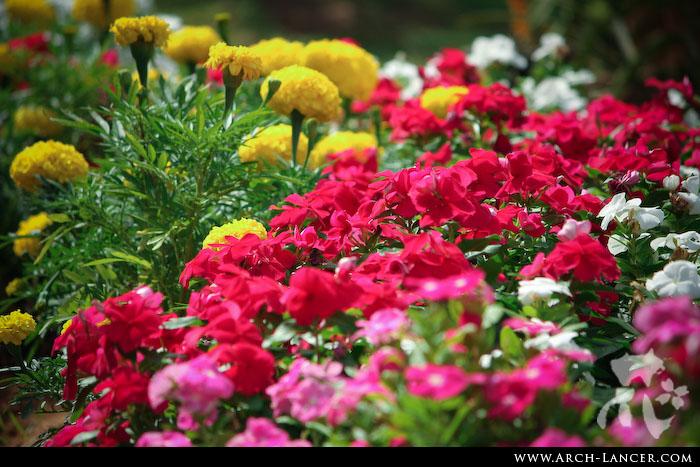 P_flower03