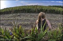 Mary the Gun Slinger (HillaryBoyd) Tags: mercedes texas mary valley sunflowers dovehunting 16mmfisheye nikond90
