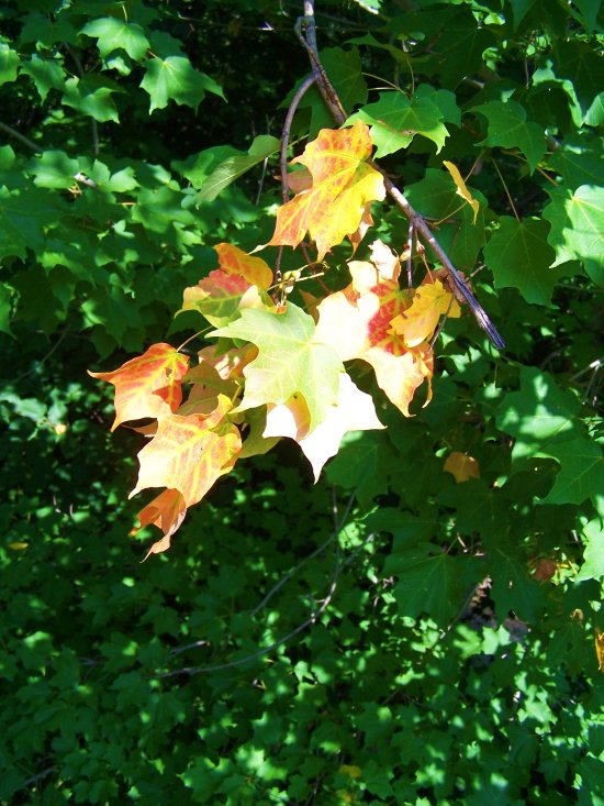 leaves changing