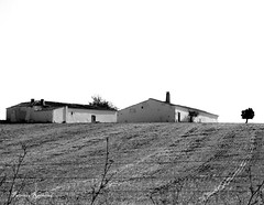 Alentejo (Patrcia Raimond) Tags: trip houses bw tree portugal field monte alentejo pretoebranco castroverde patiblue ilustrarportugal patrciaraimond