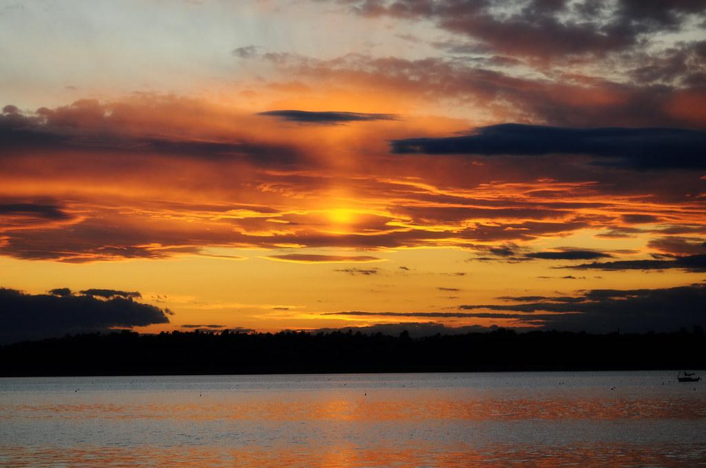 Sunset Merganser