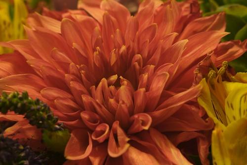 Virág sRGB