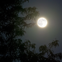 Harvest Moon (Sky Noir) Tags: sky moon tree fall night oak nikon october noir image harvest full fullmoon clear northern autumnal equinox closest hunters cycles  hemisphere the    occurs  skynoir regionwide fullmoonnames projectweather bybilldickinsonskynoircom