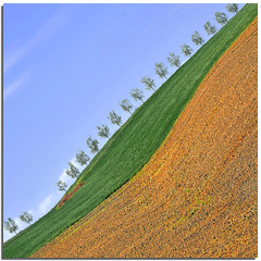 The missing tree (Nespyxel) Tags: trees nature field lines alberi landscape missing natura des tuscany land campo siena pienza toscana terra valdorcia paysages paesaggio stefano geometrie linee buonconvento geometries mancante colorphotoaward allxpressus nespyxel stefanoscarselli llite fleursetpaysages lalberomancante