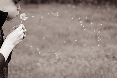 146:365 Wish (Dani_Girl) Tags: tristan dailypic moo dandelion seeds wish may365 may2011